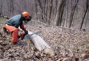 Citizens Conservation Corps of West Virginia corps member cuts a fallen tree.